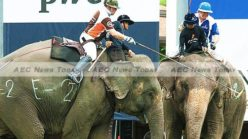 Of polo & pachyderms: Thailand trumpets return of elephant polo tournament (video & gallery)
