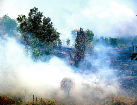 Carbon emissions from Indonesia forest fires in 2015 exceeded that produced by all of the EU the results of the only in-field studies taken at the time show