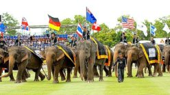 2017 King's Cup Elephant Polo Tournament To Kick Off March 9 (video)