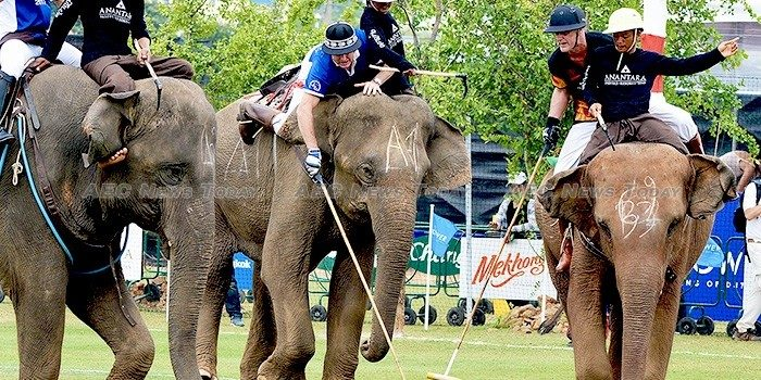 Polo tourney raises more cash to help Thailand elephants (gallery)