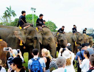 2017 King's Cup Elephant Polo tournament