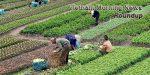Vietnam Morning News #17