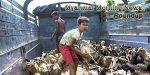 Myanmar Morning News #23