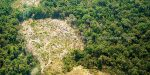 NUS Study: Cambodia Deforestation Increases Child Health Issues