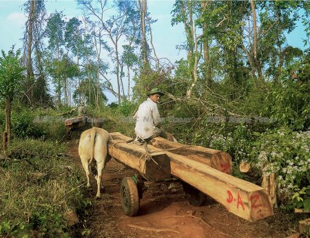 Researchers at the National University of Singapore have found a link between the loss of dense forest in Cambodia and increased rates ailments that are leading causes of childhood mortality and morbidity globally