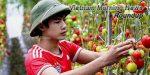 Vietnam Morning News #24