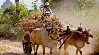Myanmar Morning News #42