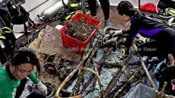 NUS divers collect 100 kg of trash from Singapore marine park