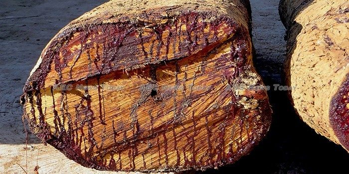 Vietnamese government helping to steal rare Siamese rosewood says Phnom Penh