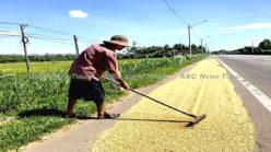 Rice self-sufficiency insufficient: In search of a better food security policy for Asia