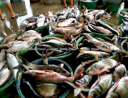 Climate change is not the only threat facing the future of the Philippine fishing industry