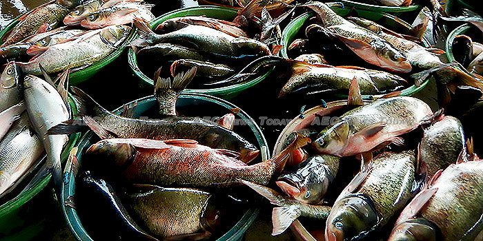 Philippine seas study: Fishing sector faces 2050 extinction