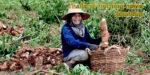 Thailand morning news #4-19 700