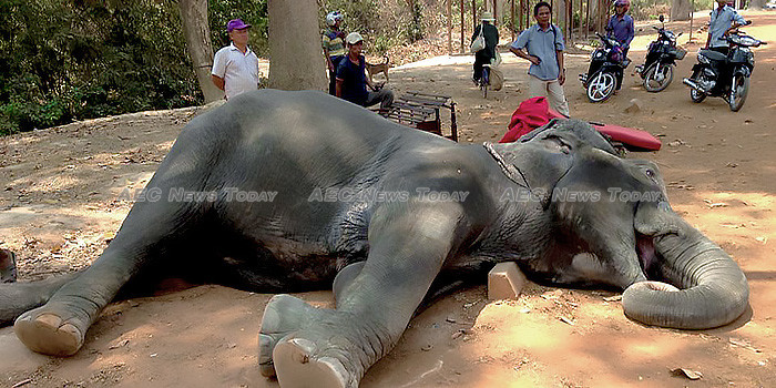 Public opinion brings the hammer down on elephant rides at Angkor Wat