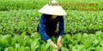 Vietnam morning news #25-19