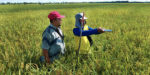 Rice production | Asean News Today