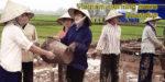 Vietnam morning news #41 - 19