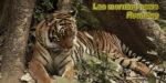Lao morning news #52-19