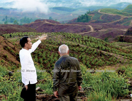 Indonesian President Joko Widodo and East Kalimantan governor, Israel Noor at an area planned to be Indonesia's new capital