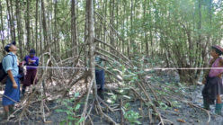 New study a call to action for Myanmar's mangroves