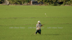 Pilot study finds IoT AWD feasible for smallholder farmers in Vietnam
