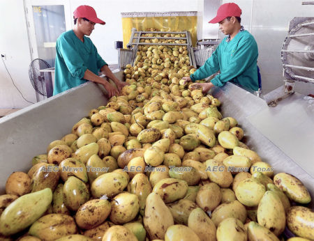 Mangoes processing for export at Nafoods group